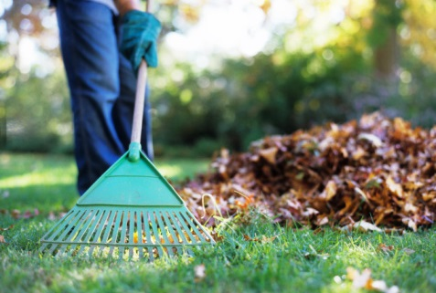 raking-leaves.jpg